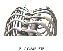 E. COMPLETE.png