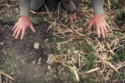 IMG_1149bare soil.jpg