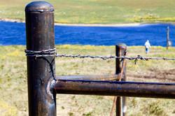 fence 7.jpg