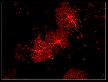 Gliogenesis.TIF