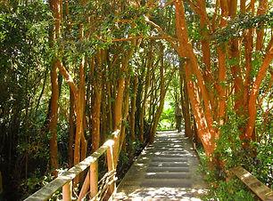trekking-parque-nacional-chiloe