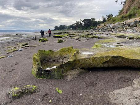 Patrimonio Paleontológico: Bosque de Alerces Fósiles!
