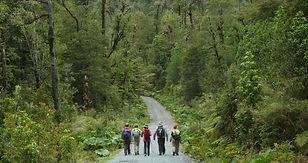 trekking-parque-nacional-alerce-andino