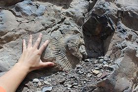 Cordillera de los Andes, fósiles