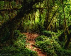 parque-tantauco-trekking