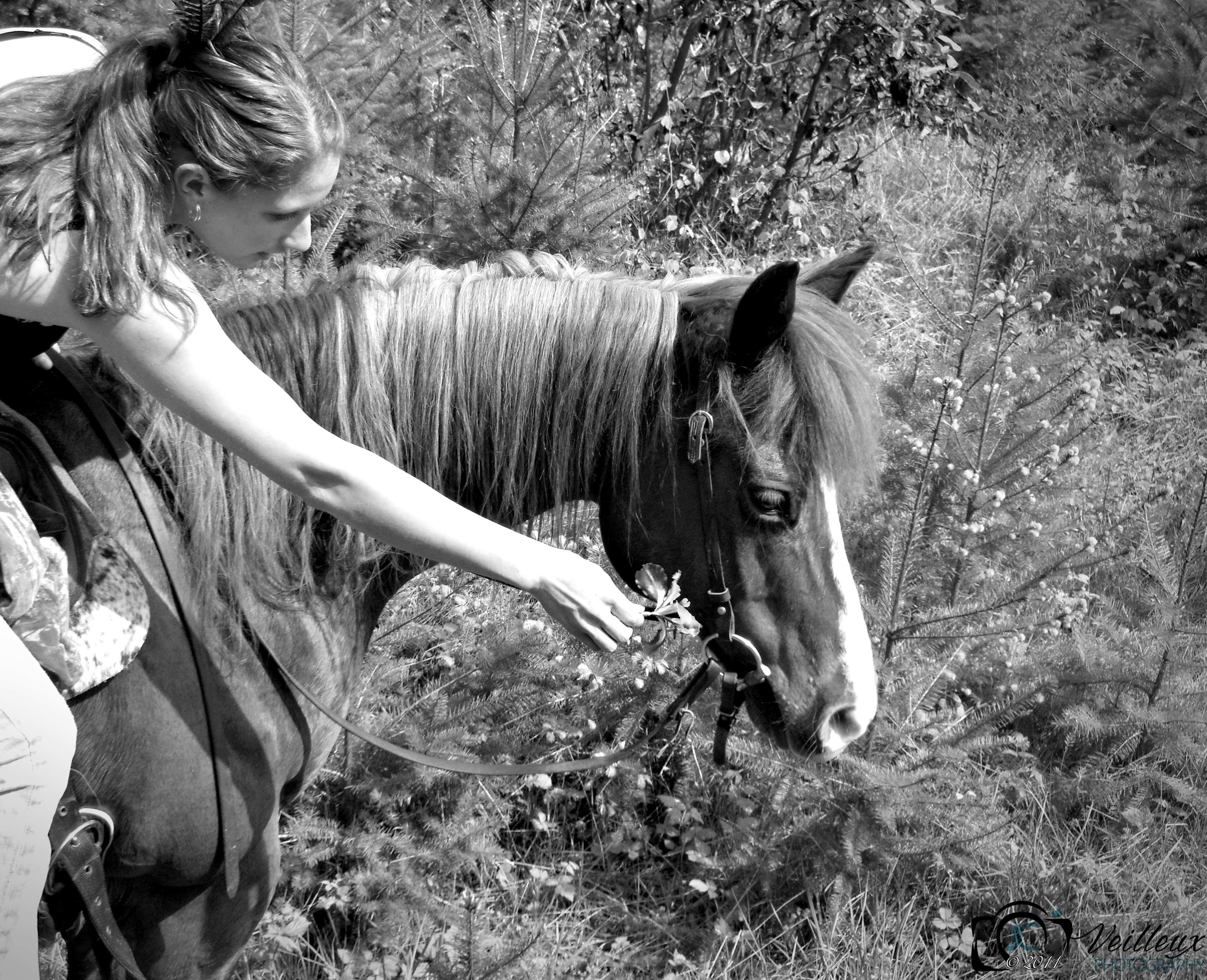 Amber Mead, Equestrian