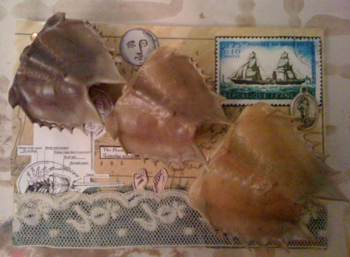 Detail: Migration