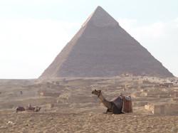Anticipation in Giza