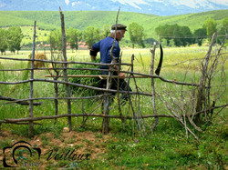 Albanian Farmer No. 1
