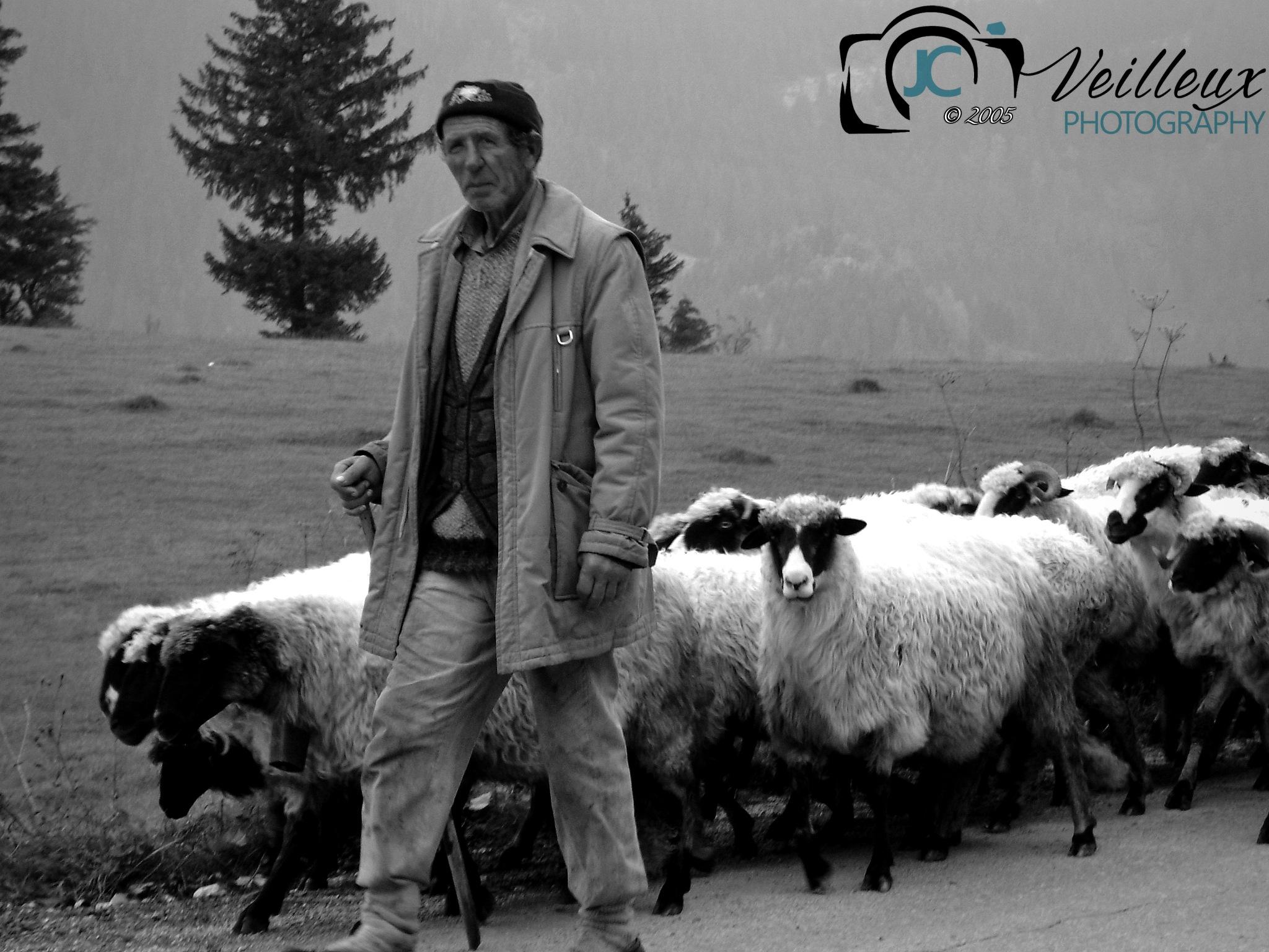 Mountain Shepherd