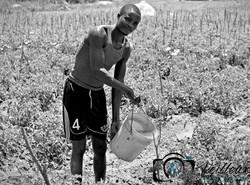 Lake Victoria Farmer No. 1