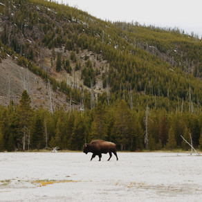 016 - Wyoming