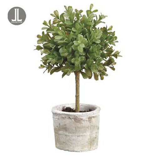 Boxwood Tree in Clay Pot