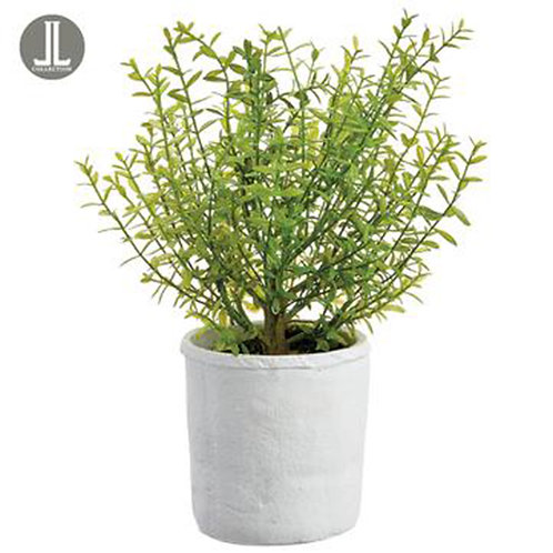 Myrtle Plant in Ceramic Pot