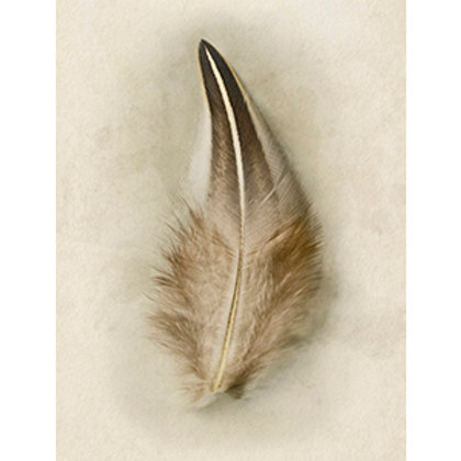 Feather Collection No. 3