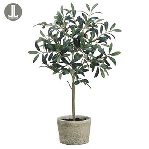 Olive Tree in Clay Pot, 26""