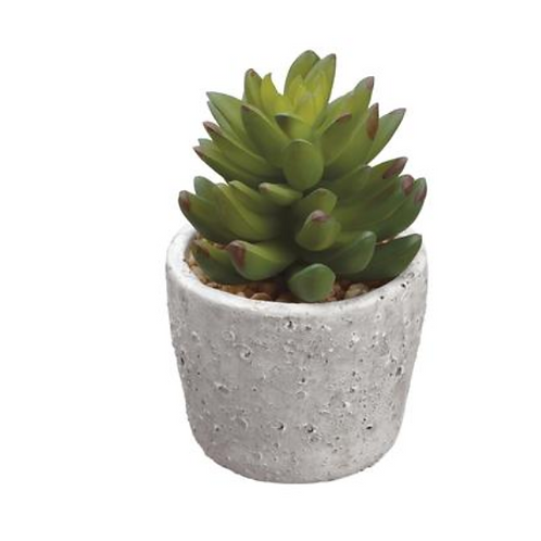 "5.75"" Succulent in Cement Pot"