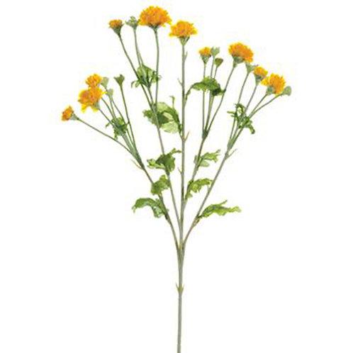Cornflower Stem