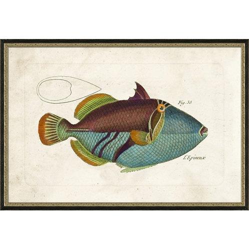 Tropical Fish No. 4