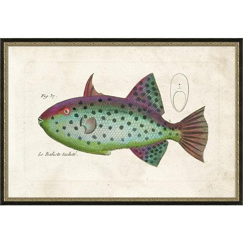 Tropical Fish No. 2