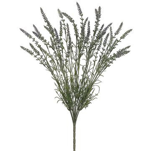 "Lavender Bush, 21"""