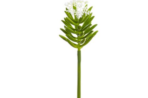 Blooming Aeonium Stem