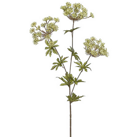 White Queen Anne's Lace Stem