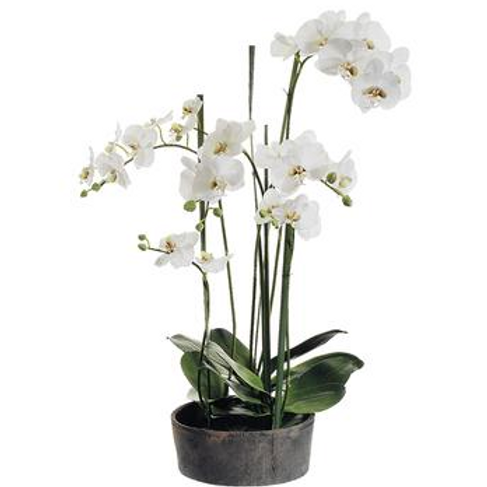 """37""""  White Orchid in Pot"""