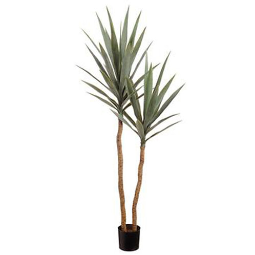 "Yucca Tree in Pot, 52"" tall"
