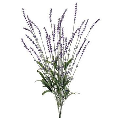 Lavender Bush Stem