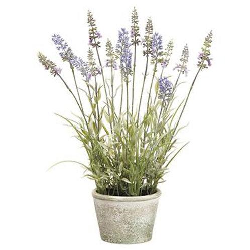 Lavender in Paper Maché Pot