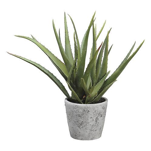 Aloe Vera Plant in Ceramic Pot