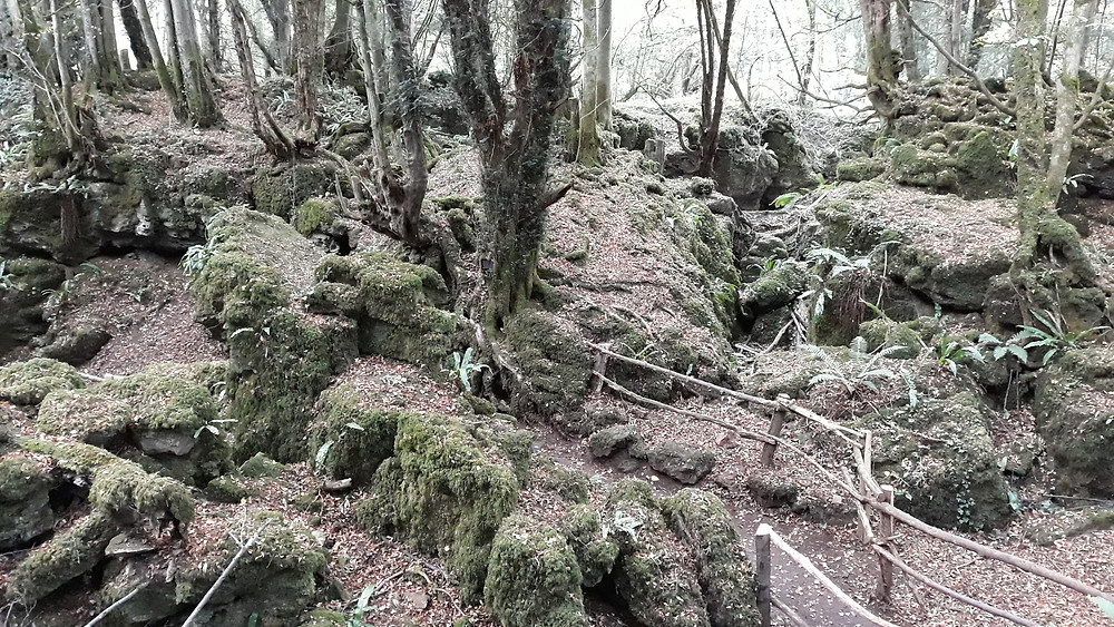 Puzzlewood or Middle Earth?