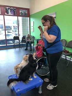 Melanie teaching dogs.HEIC