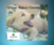 On-line Puppy Classes. for FB png.png