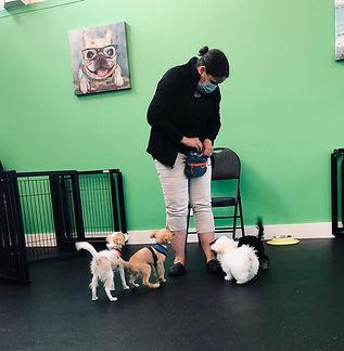Shelley & pups.jpg