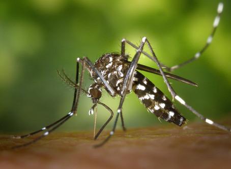 Malaria: 886% de aumento