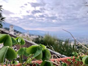 Casa Papa Giovanni Rooftop Garden, Assis