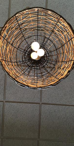 Bird Eggs, Glen Ellyn, IL