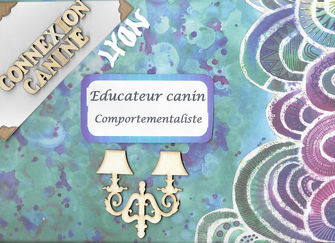 Educateur canin Comportementaliste