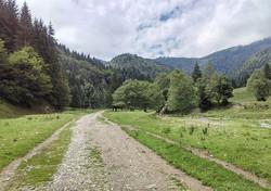 Nature Walks - II _#BackpackEurope #BackpackRomania #exploretransylvania #Carpathians #Instacarpathi