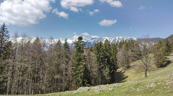 The feeling and the view both are priceless -  somewhere in the Carpathians._._