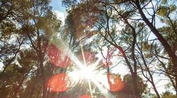 A joyful heart is like the sunshine of God's Love , the hope of eternal happiness - Mother Teresa .