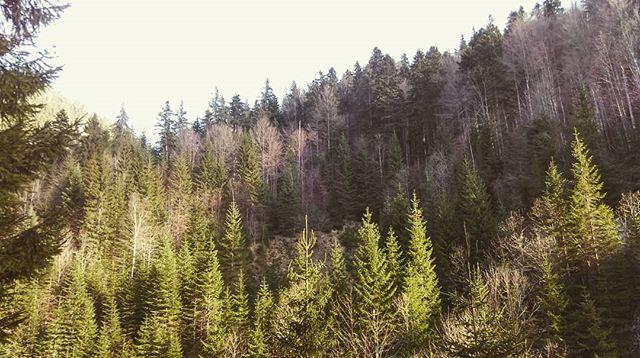 Nature Walks_._