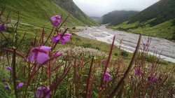 Valley of flowers 6