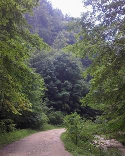 Long walks__#Brasovcounty #Zarnesti #Carpathians #piatracraiuluinationalpark #piatracraiuluimountain