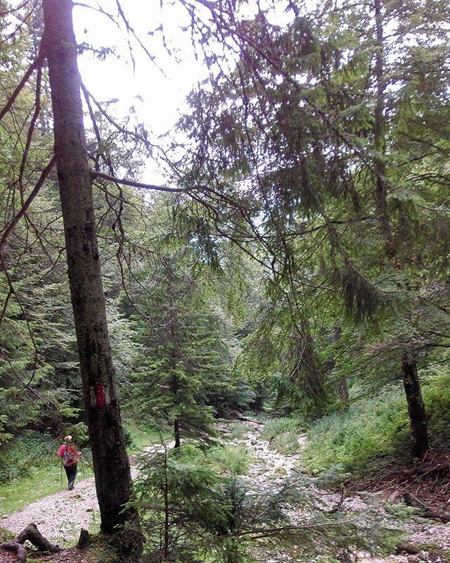 Tripping on Nature__#Brasovcounty #Zarnesti #Carpathians #piatracraiuluinationalpark #piatracraiului