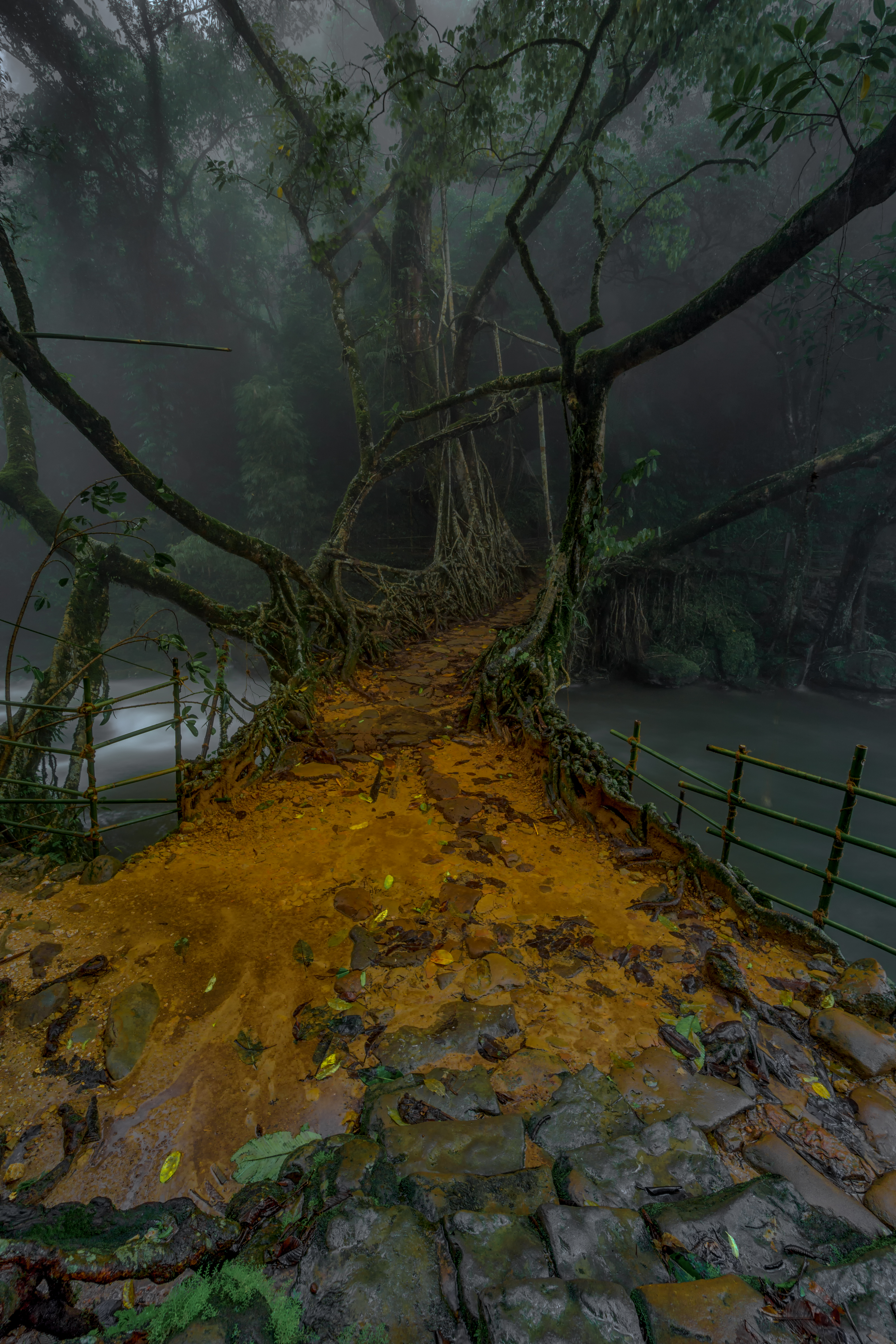 Living Root Bridge, Mawlynnong
