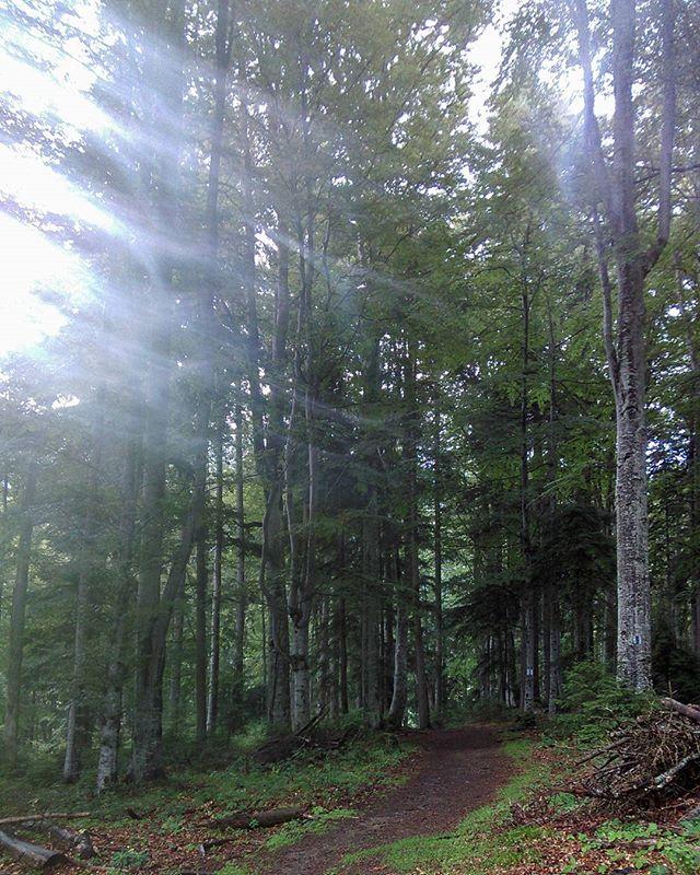 Nature has no filters - Walk to Remember__#BackpackEurope #BackpackRomania #exploretransylvania #Car