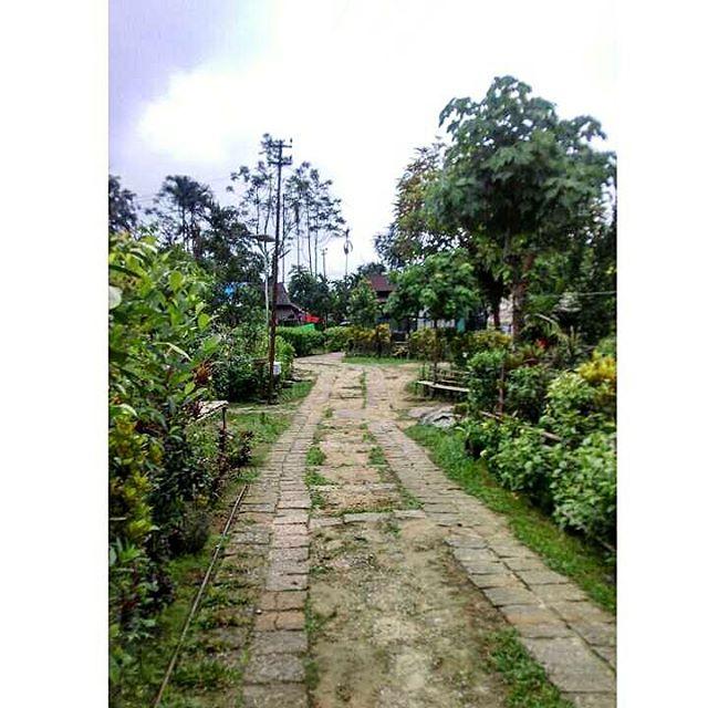 Green Way_